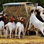 Les différences entre un fromage de vache fermier, artisanal et laitier